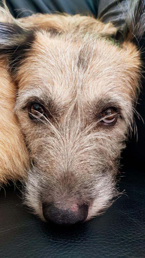 Vertrauen Angsthund