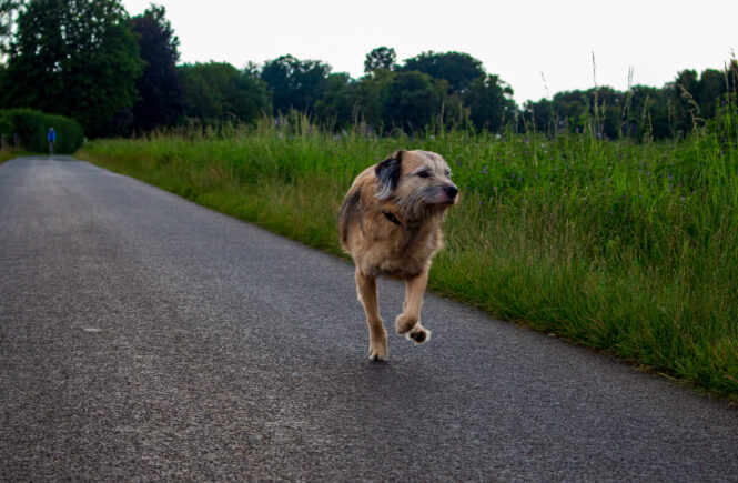 Radfahrer vs. Hund