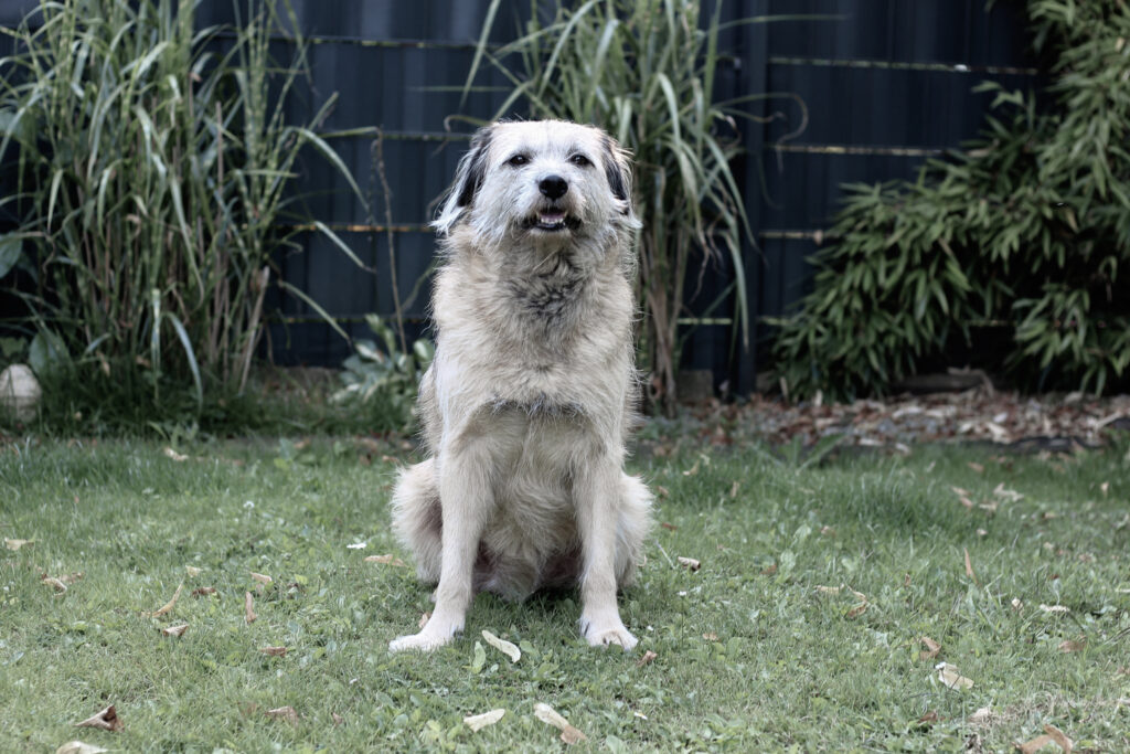 Angsthund