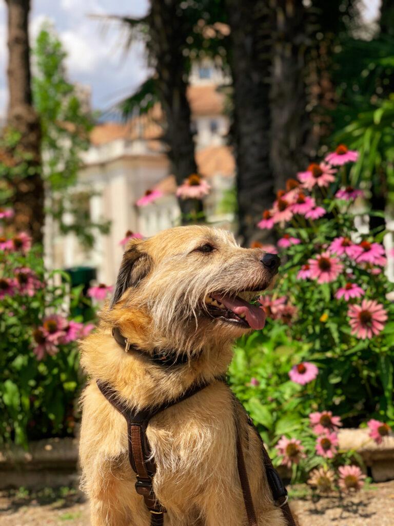 Reisen mit Hund durch Europa - Meran