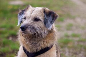 Stressfreie Hundebegegnungen