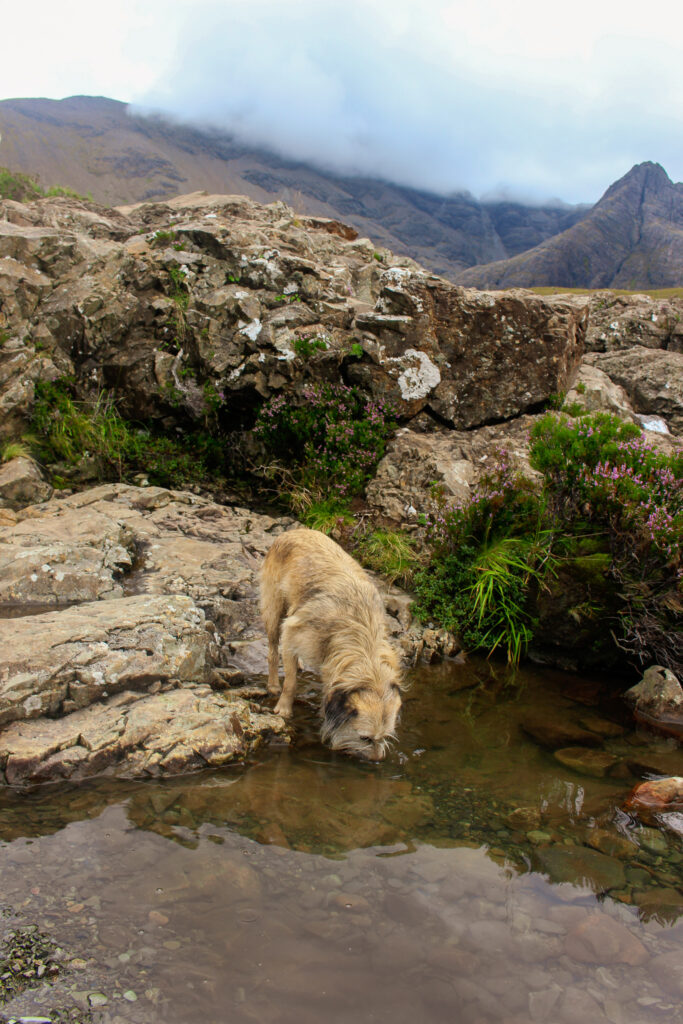 Isle of Skye mit Hund - Fairy Pools