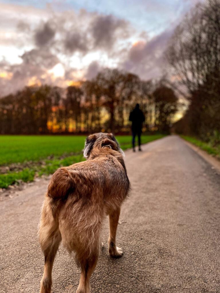Angsthund ohne Leine