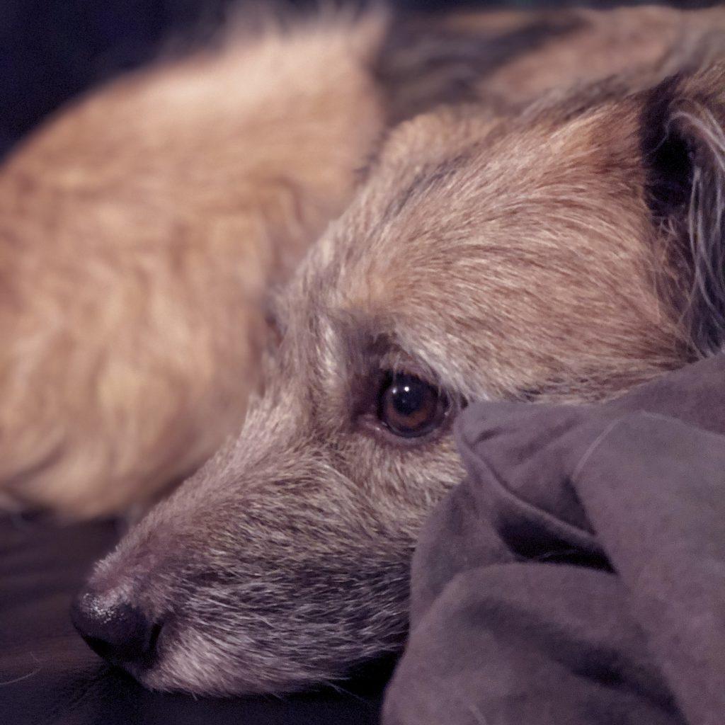 Silvesterstress beim Hund
