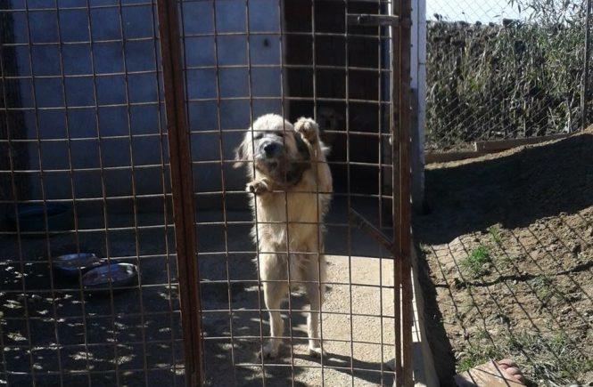 Hund aus dem Tierschutz